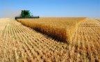 Conab divulga perspectivas para a agropecuária em 2017