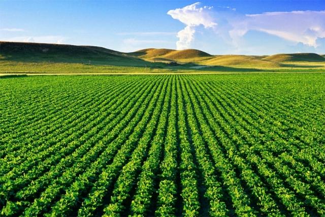 Brasil e México devem estreitar relações no agronegócio