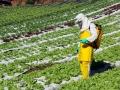 Meta de zerar resíduos de agrotóxicos em vegetais está próxima, diz Ministério da Agricultura
