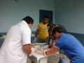 Prefeitura de Ji-Paraná oferecerá melhoramento genético para rebanho leiteiro