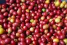 Luiz Cláudio pressiona e Ministério da Agricultura não importará café de outros países