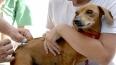 Cães e gatos devem ser vacinados contra raiva no próximo sábado em Ji-Paraná