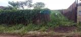Proprietários de terrenos baldios serão notificados em Porto Velho
