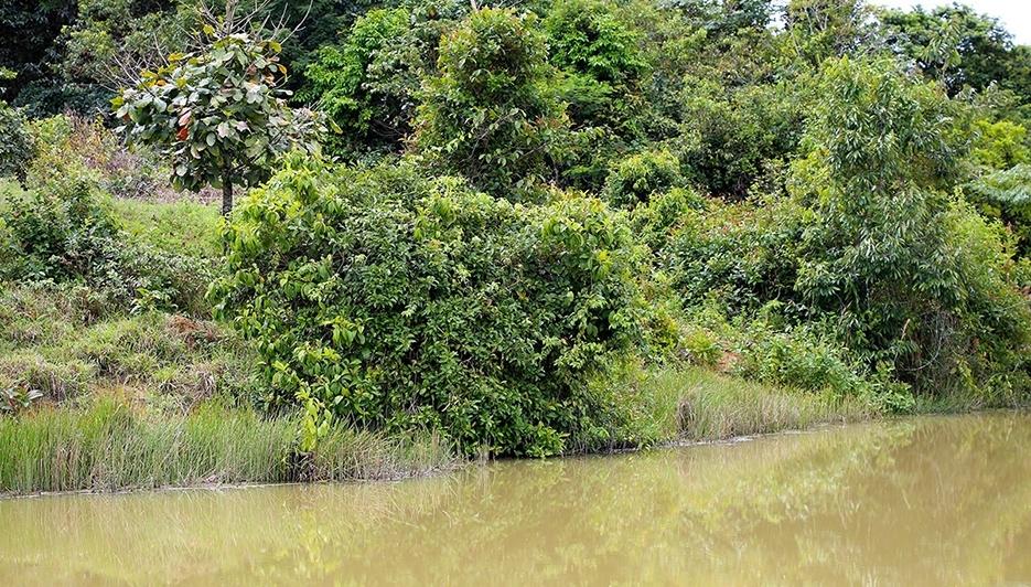 'Semeando Sustentabilidade' apoia recuperação de áreas em Rondônia