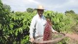 Funrural: deputado Lúcio Mosquini quer 90% de abatimento na dívida do produtor rural