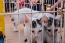 Delegacia de Crimes Ambientais vai investigar infrações contra animais em Rondônia