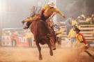 Cerca de 45 peões disputam mais de R$ 30 mil em prêmios no rodeio da Expojipa 2017