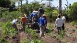 Agricultores comemoram a primeira colheita do inhame em Porto Velho