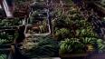 Programa de Aquisição de Alimentos diversifica agricultura familiar e terá adição de R$ 9 milhões