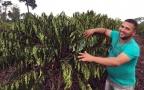 Produtor de Cacoal vence 2ª edição do Concurso de Qualidade e Sustentabilidade do Café de Rondônia
