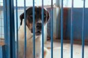 Núcleo de Proteção atende em média três ocorrências por dia de maus-tratos contra animais em Porto Velho