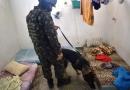Ação das Forças Armadas em presídios de Rondônia chega a Casa de Detenção de Jaru