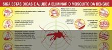 População deve manter limpeza de terrenos no período chuvoso como forma de combate à dengue