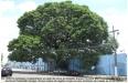 Porto Velho - A Sustentabilidade e a Ecologia não são nossas prioridades