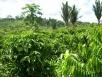 O Projeto de Lei do Novo Código Florestal Brasileiro é de Rondônia