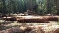 Homem é preso por extração ilegal de madeira em Vila Nova de Samuel