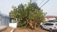 Temporal em Porto Velho registrou ventos de até 80,6 Km/h