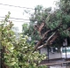Eletrobras teve 400 ocorrências após o temporal em Porto Velho