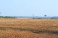 Período de vazio sanitário chega ao fim e produtores de soja já podem iniciar produção