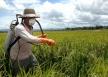 Agricultores de Rondônia utilizam cerca de 36 toneladas de agrotóxicos por ano