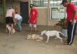 Prefeitura de Ouro Preto promove campanha de vacinação antirrábica no sábado