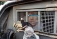Fotos: Polícia prende um após assalto e fuga com tiroteio em Porto Velho