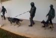 Vídeo: Devassa das Forças Armadas em presídios apreende centenas de armas artesanais