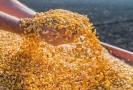 Conab em Rondônia tem mais de mil toneladas de milho para venda a pequenos criadores