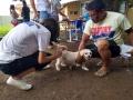 Centenas de animais são imunizados contra raiva neste sábado em Porto Velho