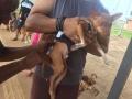 Mais de 35 mil animais são vacinados contra raiva em Porto Velho