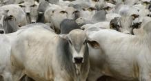 Com crescimento de 5,5% em 2017, confinamento de bovinos volta a se recuperar