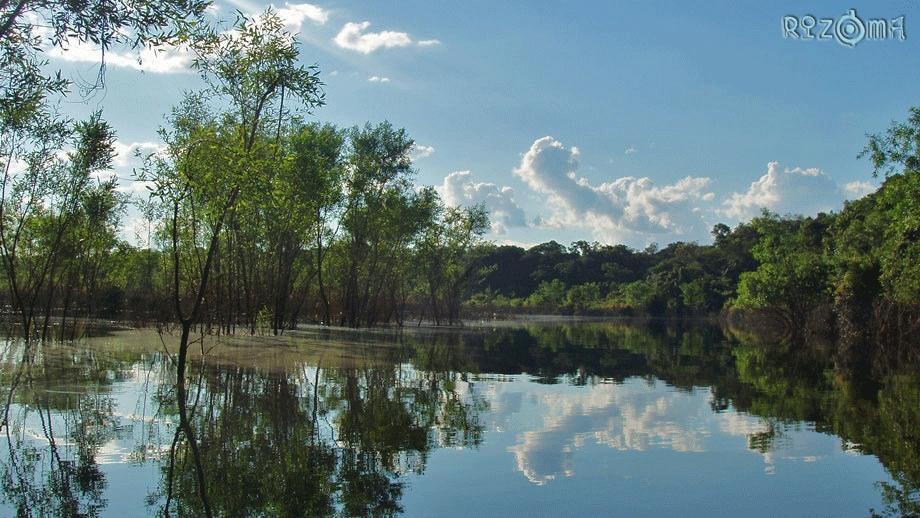 Por suspeita de febre amarela, Agevisa e Lacen vão investigar mortes de macacos na Reserva do Lago do Cuniã