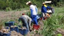 Semagric realiza evento com agricultores para fomentar produção de inhame em Porto Velho