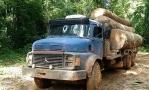 Ação de madeireiros em terra indígena é denunciada por associações de Rondônia