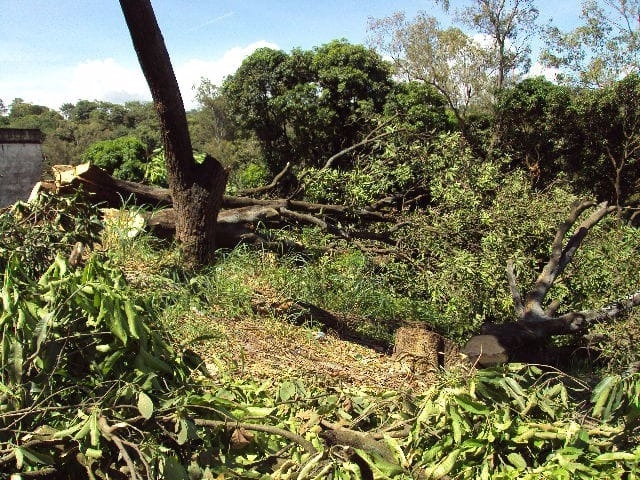 Trabalhador morre atingido por galho de árvore durante derrubada em Rondônia