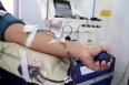 Fhemeron alerta que doação de sangue deve ser feita antes da vacinação contra o sarampo