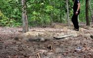 Restos mortais de mulher que estava desaparecida são encontrados pela PM em matagal