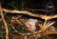 Árvore cai em acampamento, mata dois primos e deixa 10 feridos