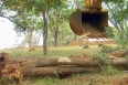 Trabalhador braçal morre durante derrubada de árvores em Candeias