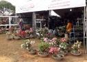 Expositores vendem flores, produtos para animais e móveis de materiais recicláveis na 3ª Portoagro