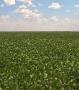 Tecnologia e boa rentabilidade da soja resultam em produção recorde de grãos Rondônia