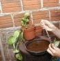 Ji-Paraná está em estado de alerta para surto de dengue
