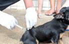 Vacinação de cães e gatos é neste sábado; veja onde vacinar