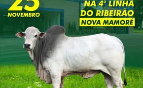 Leilão beneficente em prol do Hospital Santa Marcelina