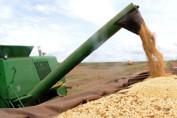 Brasil aumenta produtividade de grãos na safra 2018/2019