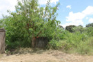 Proprietários de terrenos baldios podem ser multados em Ji-Paraná