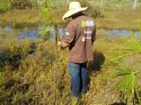 Projetos patrocinados pela Petrobras protegem 2,7 milhões de hectares de florestas em RO, MT e AM
