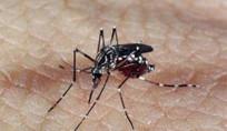 Casos de dengue crescem 224% no Brasil com 229 mil pacientes este ano