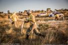 ICMBio abre inscrições para brigadistas e chefes de esquadrão para a Flona Bom Futuro