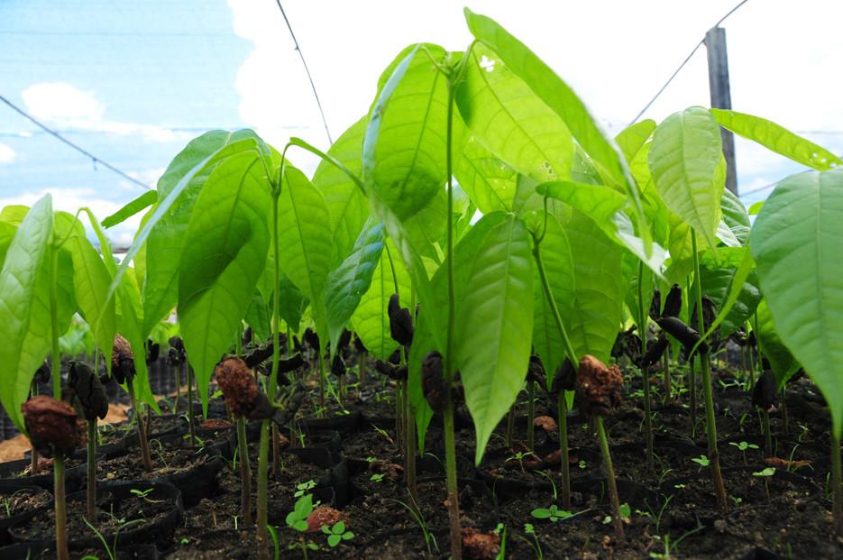 Semana do Meio Ambiente têm atividades em escolas de Itapuã, Cujubim e Rio crespo